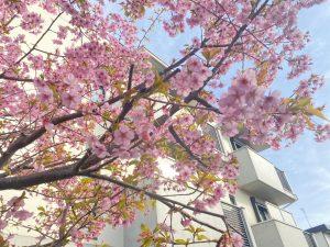 春の季節☆